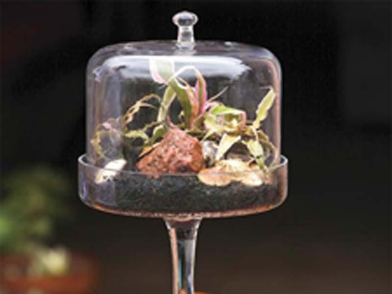 Per circondarti di verde anche in inverno realizza un - Giardini in bottiglia ...